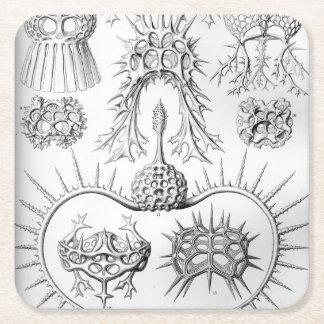 Ernst Haeckel  Spyroidea Sea Creatures Square Paper Coaster