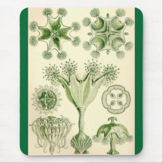 Ernst Haeckel - Stauromedusae Jellyfish Mouse Pad