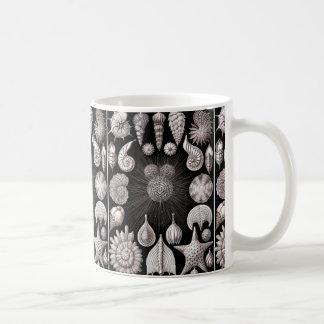 Ernst Haeckel Thalamophora I Coffee Mug