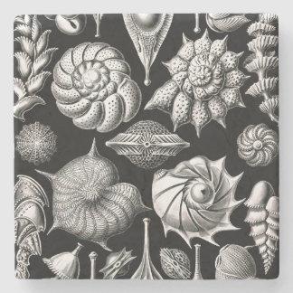 Ernst Haeckel Thalamophora II Stone Coaster