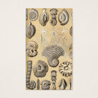 Ernst Haeckel Thalamophora shells Business Card