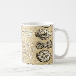 Ernst Haeckel Thalamophora shells Coffee Mug