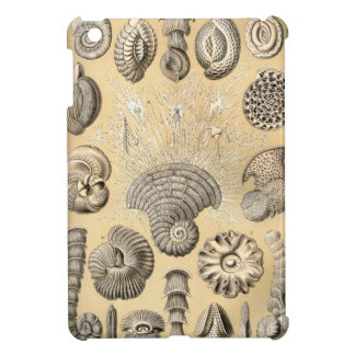 Ernst Haeckel Thalamophora shells Cover For The iPad Mini