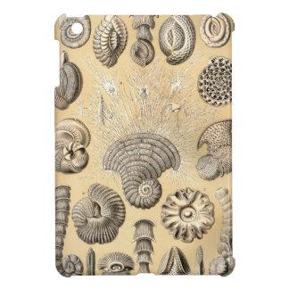Ernst Haeckel Thalamophora shells iPad Mini Covers