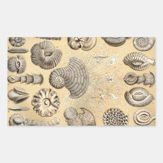 Ernst Haeckel Thalamophora shells Rectangular Sticker