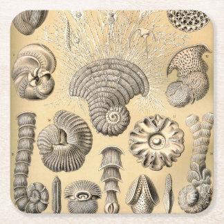 Ernst Haeckel Thalamophora shells Square Paper Coaster