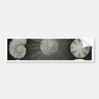 Ernst Haeckel Thalamphora Bumper Sticker