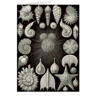 Ernst Haeckel Thalamphora Card