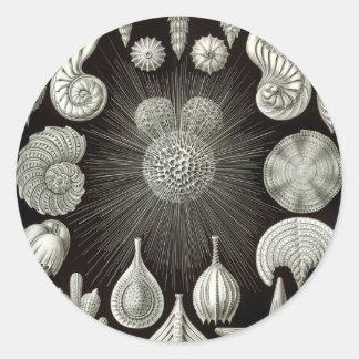 Ernst Haeckel Thalamphora Classic Round Sticker