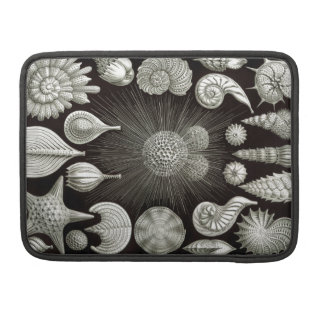 Ernst Haeckel Thalamphora Sleeve For MacBooks