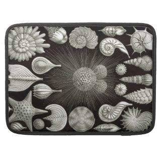 Ernst Haeckel Thalamphora Sleeves For MacBook Pro