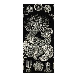 Ernst Haeckel Thuroidea Sea Cucumbers 10 Cm X 23 Cm Rack Card