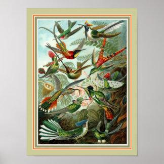 """Ernst Haeckel """"Trochilidae""""  12 x 16  Print"""