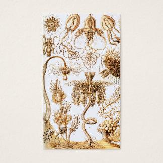Ernst Haeckel Tubulariae Business Card