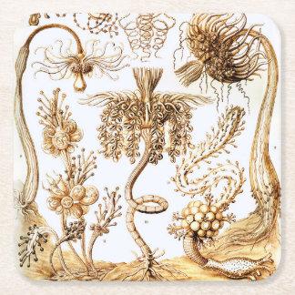 Ernst Haeckel Tubulariae Square Paper Coaster