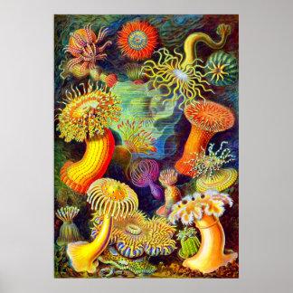 Ernst Haeckel's Sea Anemones Poster