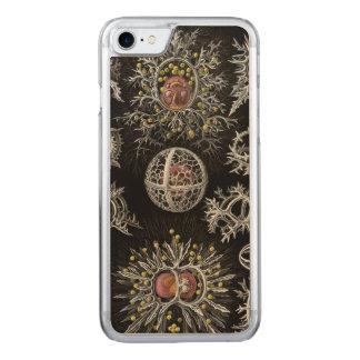 Ernst Haeckel's Stephoidea Carved iPhone 8/7 Case