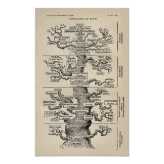 """Ernst Haeckel's """"tree of life"""" Poster"""