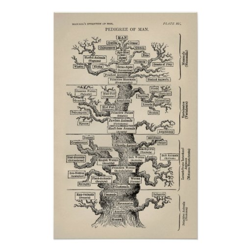 "Ernst Haeckel's ""tree of life"" Poster"
