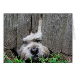Escape Artist Cute Dog, Puppy Greeting Card