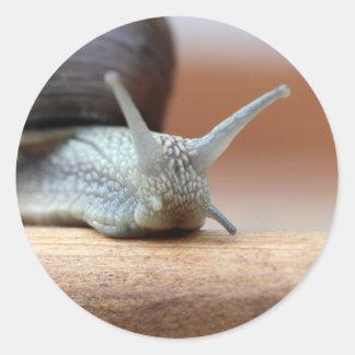 Escargot Classic Round Sticker