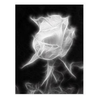 Essence of a Rose 2 Postcard