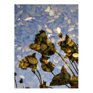 Ethereal Lotus Postcard