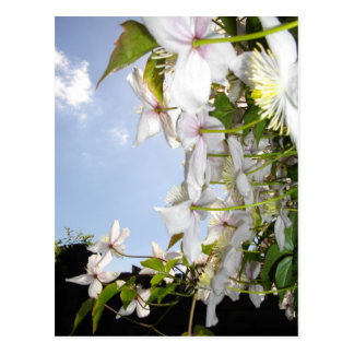 ETHEREAL PETALS WITH SKY POSTCARD