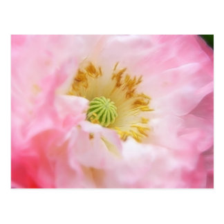 Ethereal Pink Poppy Postcard