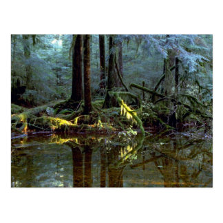 Ethereal pool in forest Stillaguamish River Wash Postcards