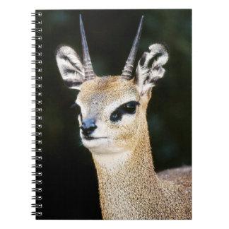 Ethiopia, Klipspringer looking away Notebook