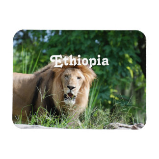 Ethiopia Lion Rectangular Photo Magnet