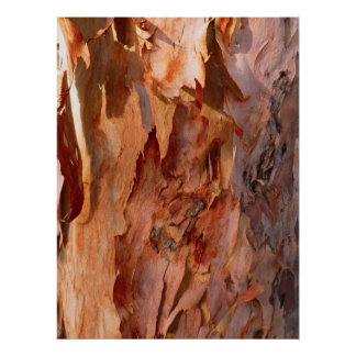 Eucalyptus Bark Print