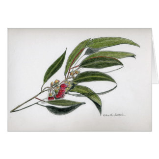 Eucalyptus leaves card