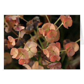 Euphorbia in the Autumn sunlight Card