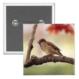 Eurasian Tree Sparrow Button