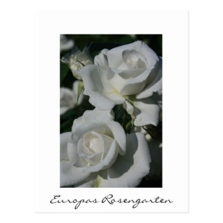 Europas Rosengarten Postcard