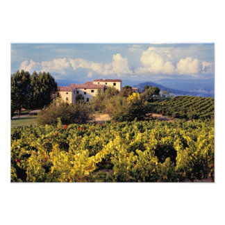 Europe, France, Bonnieux. Vineyards cover the Photo