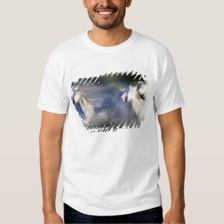 Europe, France, Ile del la Camargue. Camargue 6 Shirt