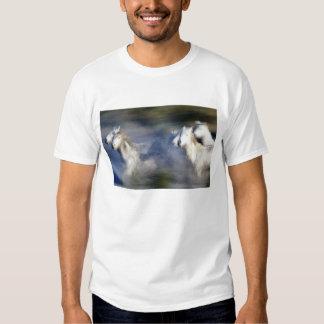 Europe, France, Ile del la Camargue. Camargue 6 Tee Shirt
