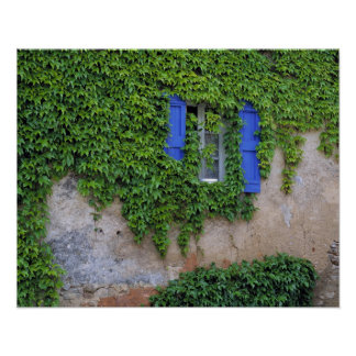 Europe, France, Lourmarin. Cascading ivy Poster
