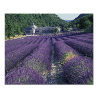 Europe, France, Provence. Lavander fields Poster