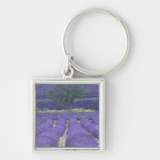 Europe, France, Provence, Sault, Lavender fields 2 Silver-Colored Square Key Ring