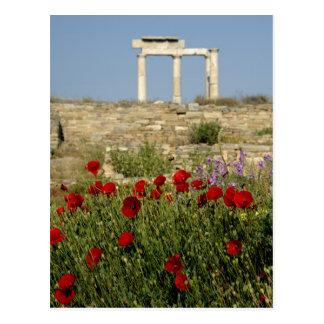 Europe, Greece, Cyclades, Delos. Column ruins. 2 Postcard