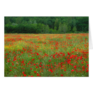 Europe, Italy, Tuscany, red poppies in field. Greeting Card