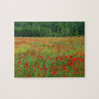 Europe, Italy, Tuscany, red poppies in field. Puzzles