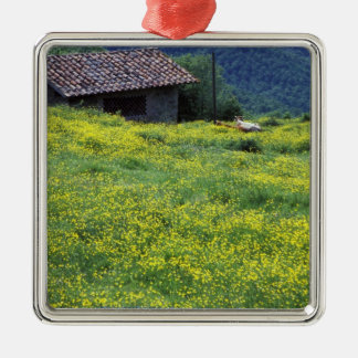 Europe, Italy, Tuscany, Siena, Chianti. Silver-Colored Square Decoration