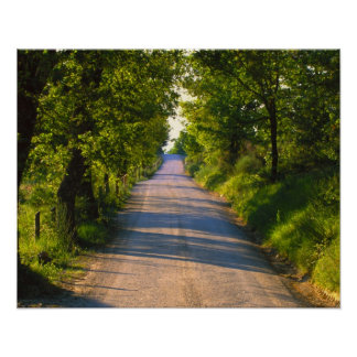 Europe, Italy, Tuscany, tree lined road Poster