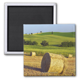 Europe, Italy, Tuscany, Val d'Orcia, Pienza - Magnet