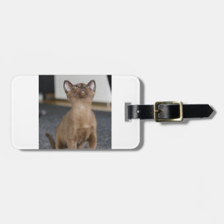 european burmese kitten luggage tag